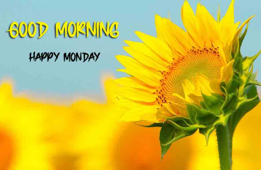 Monday Good Morning Images pictures photo free hd