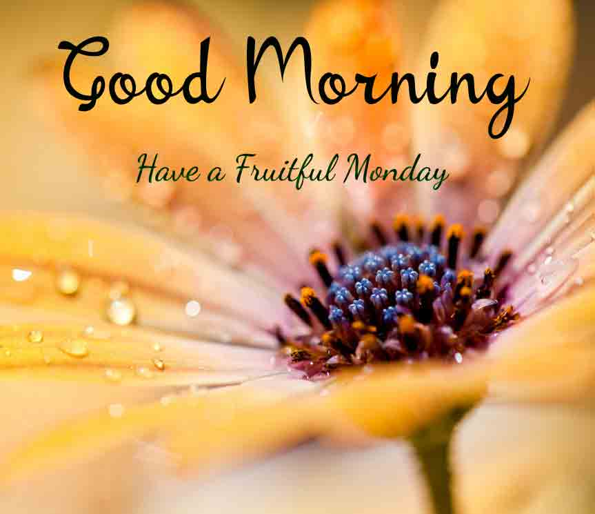Monday Good Morning Images ppics for download hd