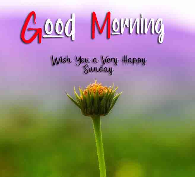 New Good Moring Happy Sunday pictures free hd