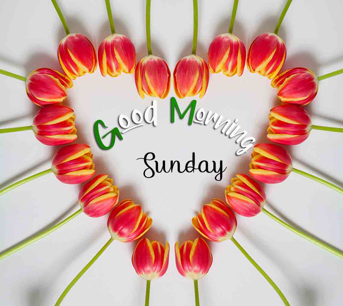Nice Good Moring Happy Sunday pictures for facebook
