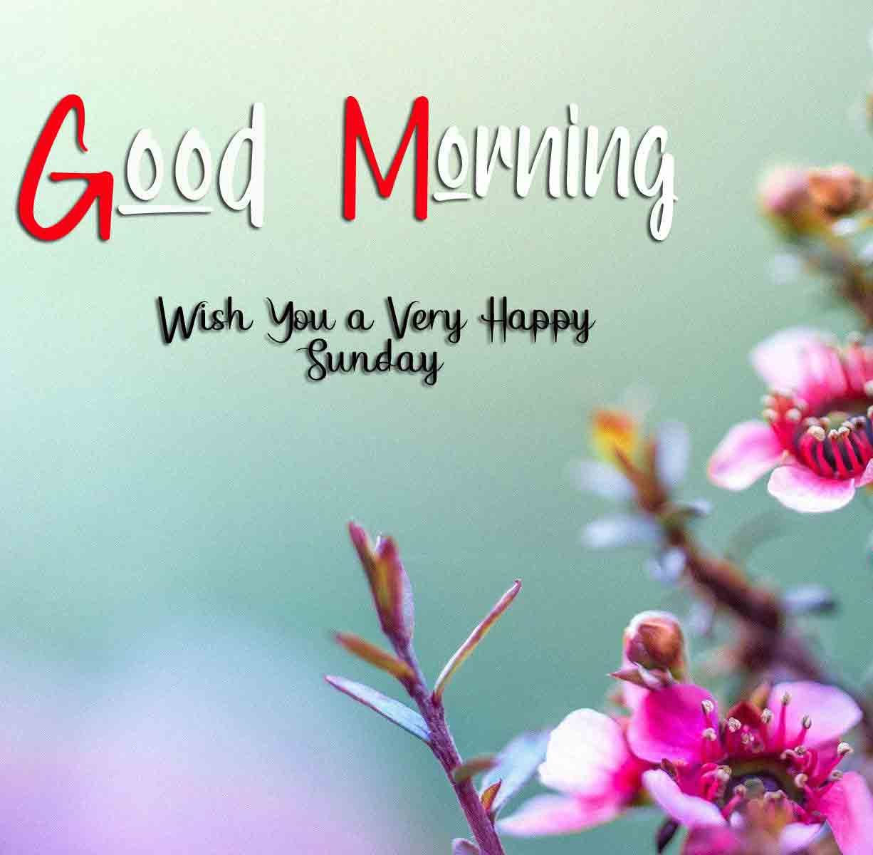 Nice Good Moring Happy Sunday pictures pics photo download