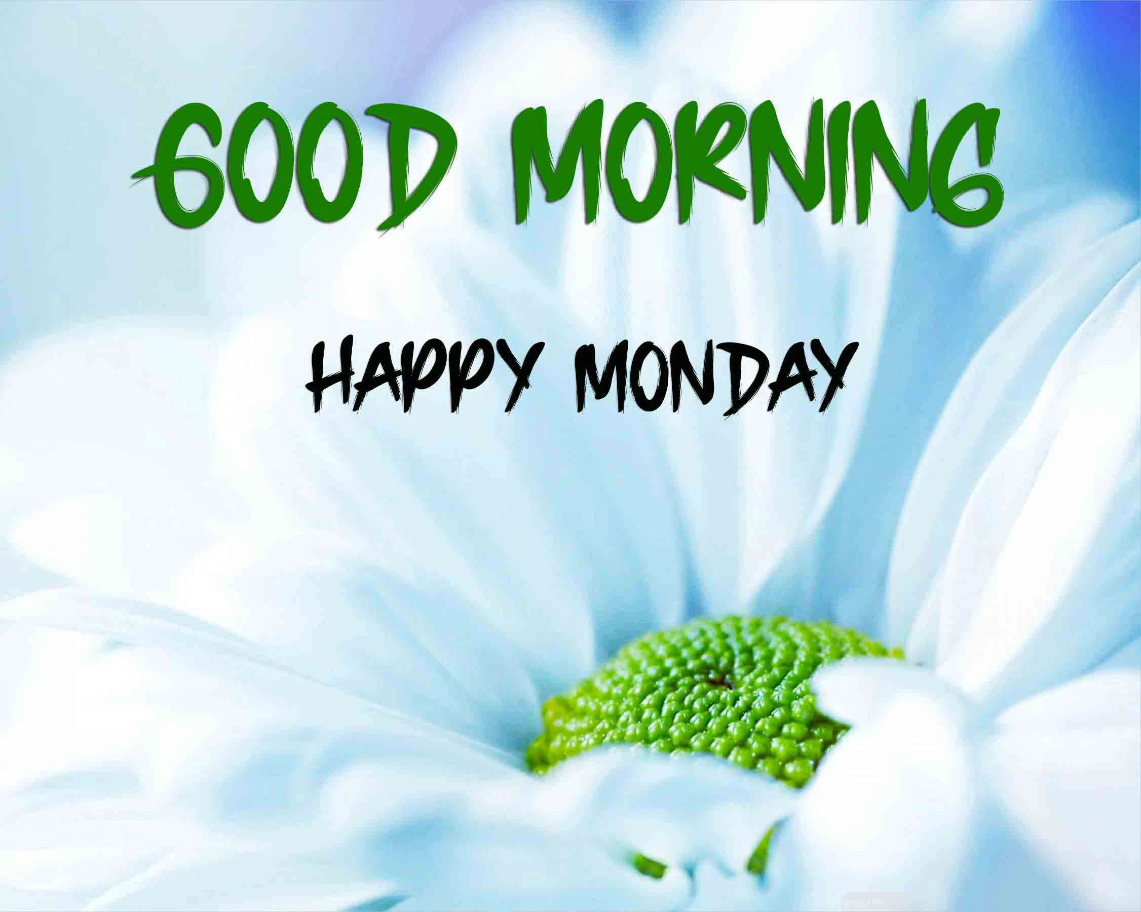 Nice Monday Good Morning Images pictures pics hd