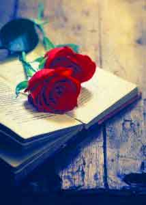 Red Rose Best Whatsapp DP Images