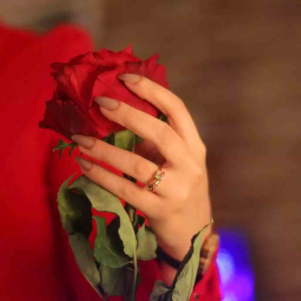 Red Rose Whatsapp Dp Images Pics HD