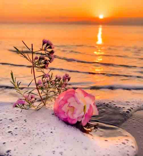 Sunset With Flower Whatsapp Dp Images Pics HD