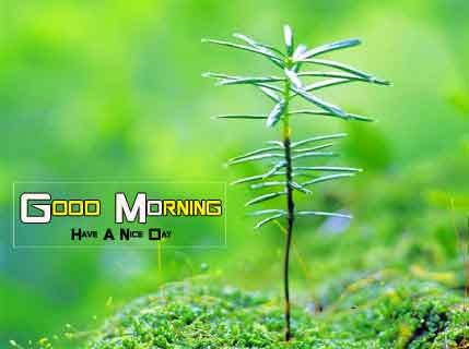 alone Good Morning Nature hd download
