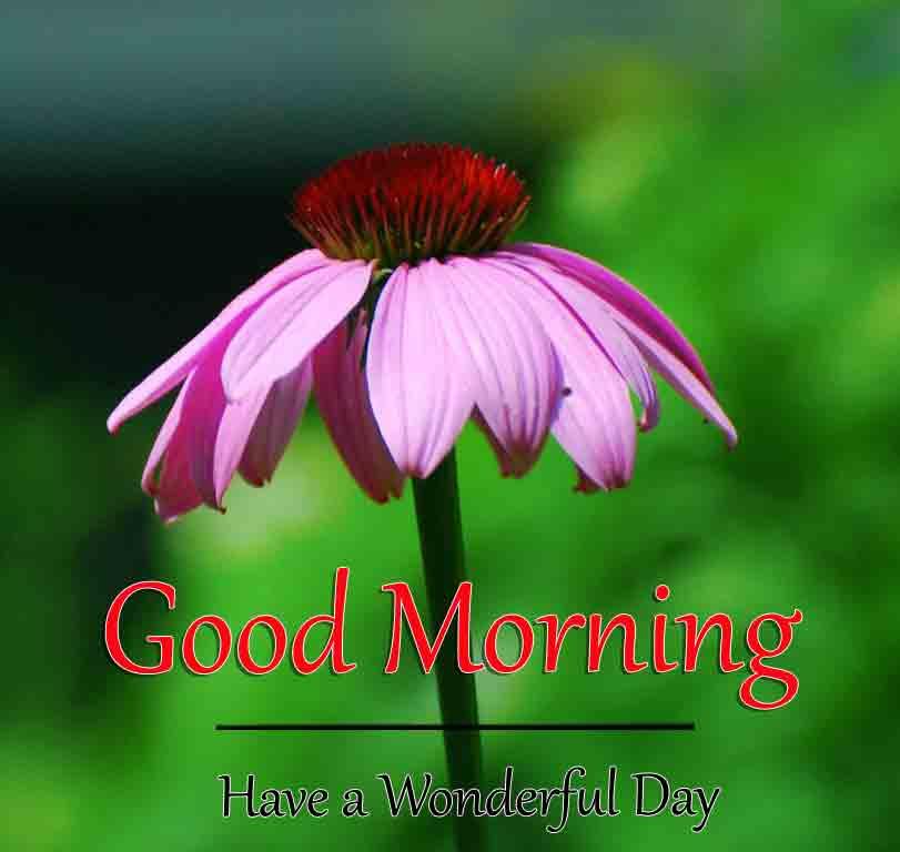 alone flower k Good Morning pics hd