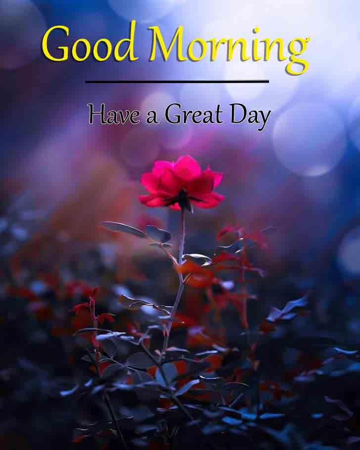 alone rose p Good Morning pics hd