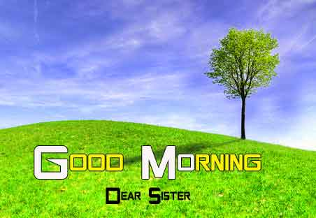alone tree Good Morning Nature hd download