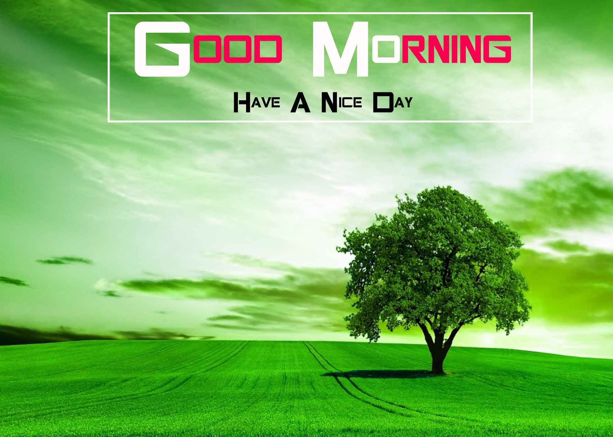 alone tree Good Morning Nature hd