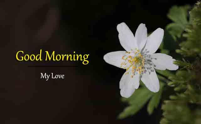 alone wood flower Good Morning pics hd