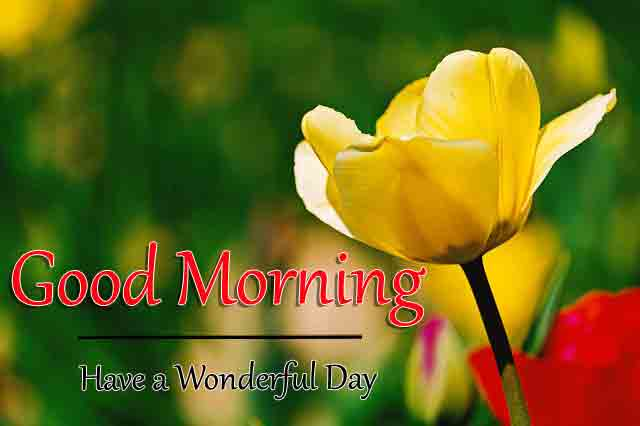alone yellow flower Good Morning images hd