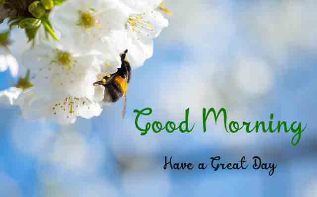 beautiful flower k Good Morning picture hd download