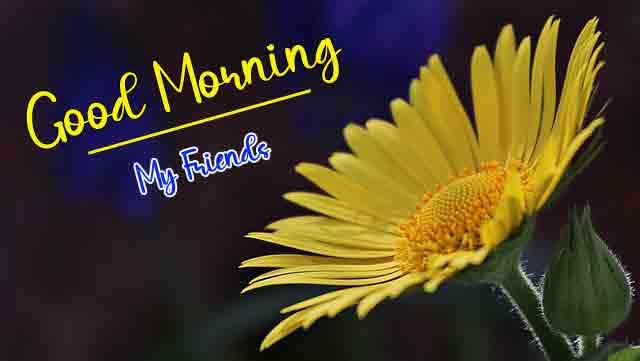 best p Good Morning flower photo