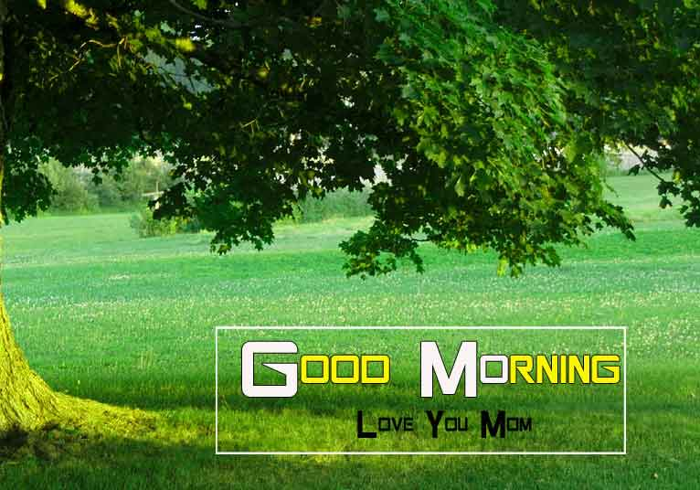 best green nature Good Morning photo
