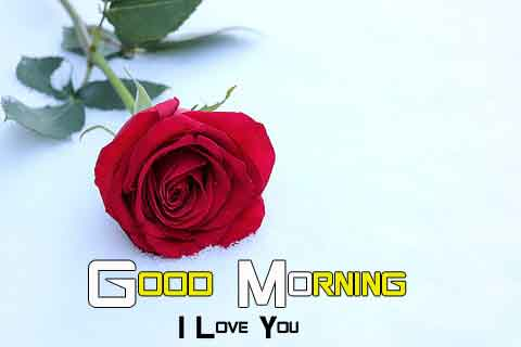 best sad rose Flower good morning hd download