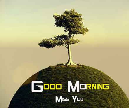 best small tree Good Morning Nature photo