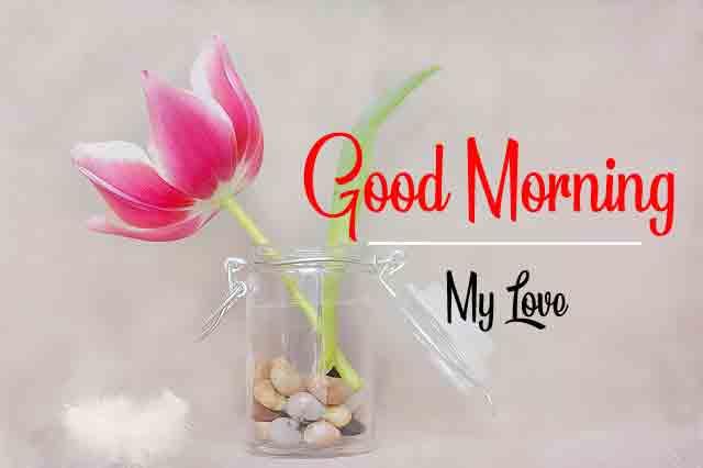 best tulips Good Morning pics hd