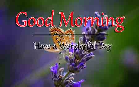 butterfly k Good Morning images hd