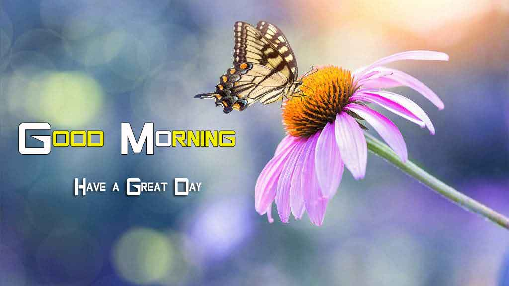 butterfly Flower good morning have a nice day pics