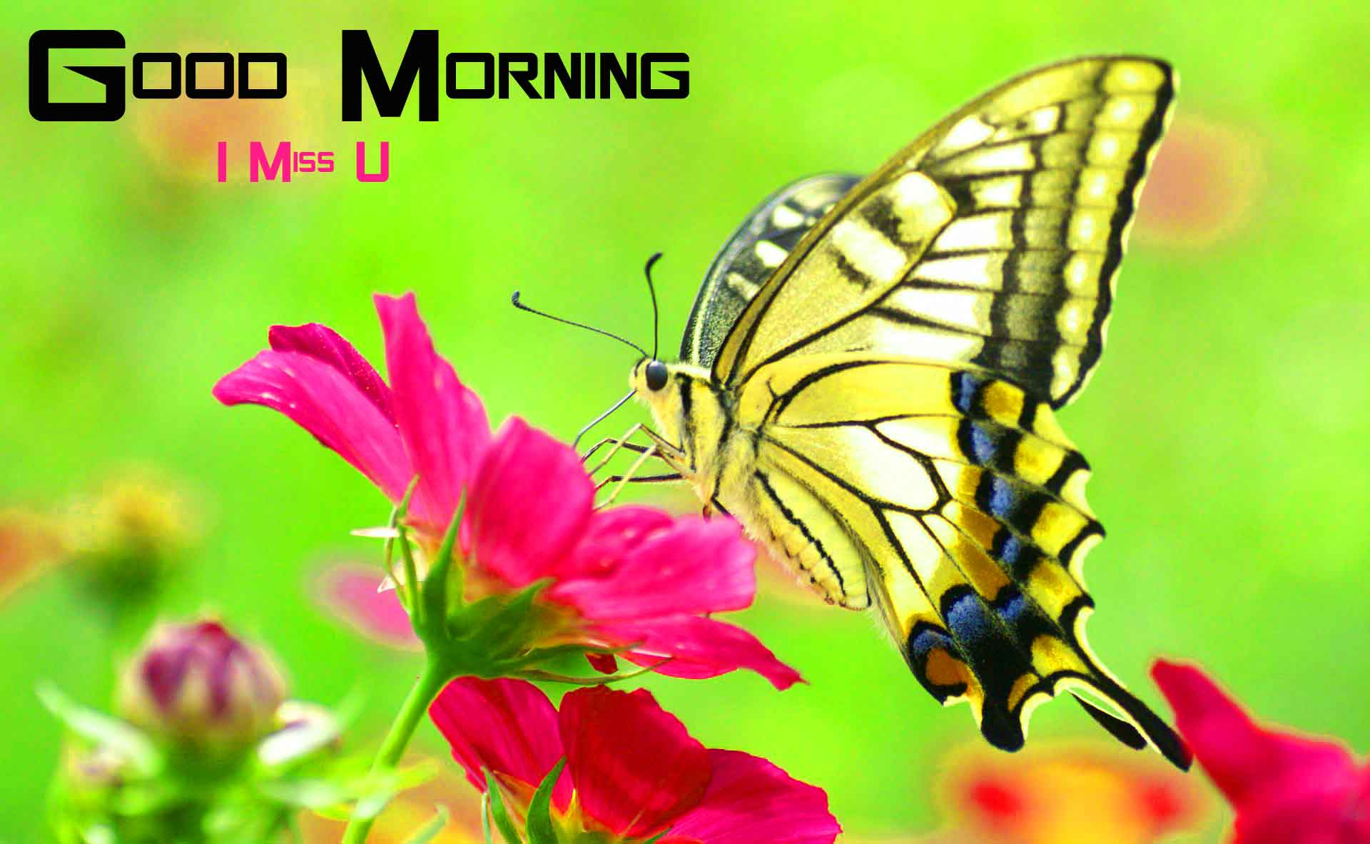 butterfly Flower good morning pics hd