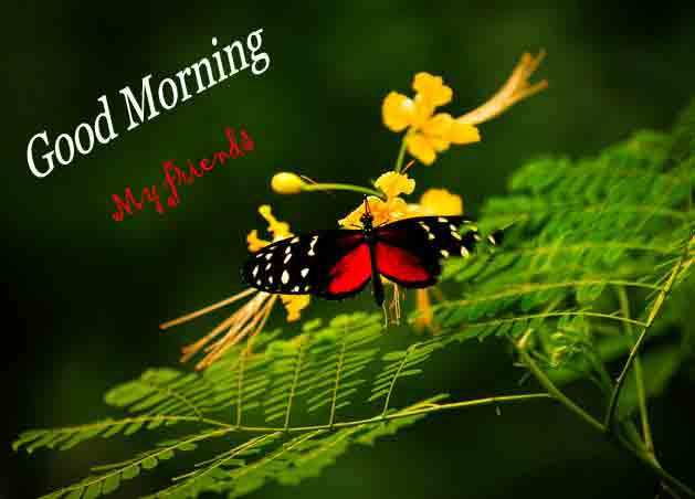 butterfly Good Morning imges hd download