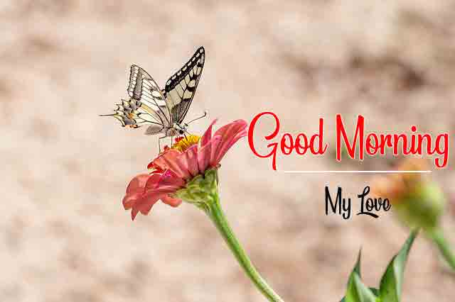 butterfly and flower for k Good Morning pics hd