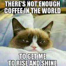 cat Funny whatsapp profile images
