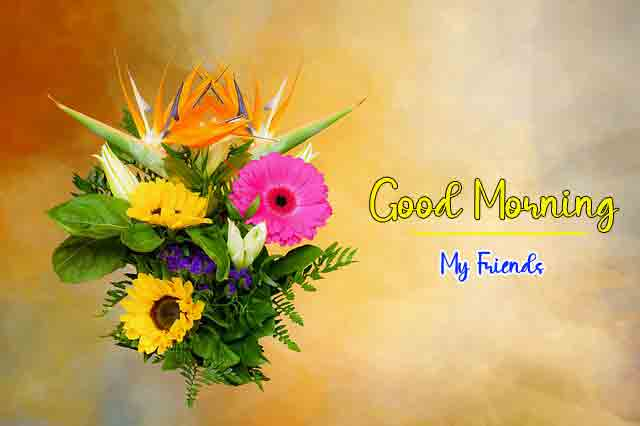 colorful p Good Morning flower images hd