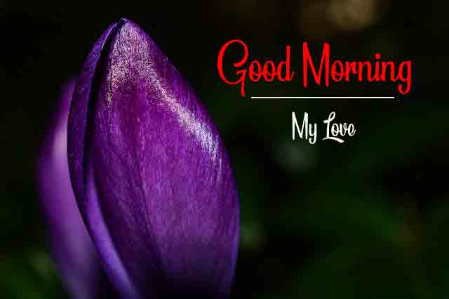 crocus flower p Good Morning pics hd