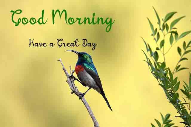 cute bird k Good Morning photo hd