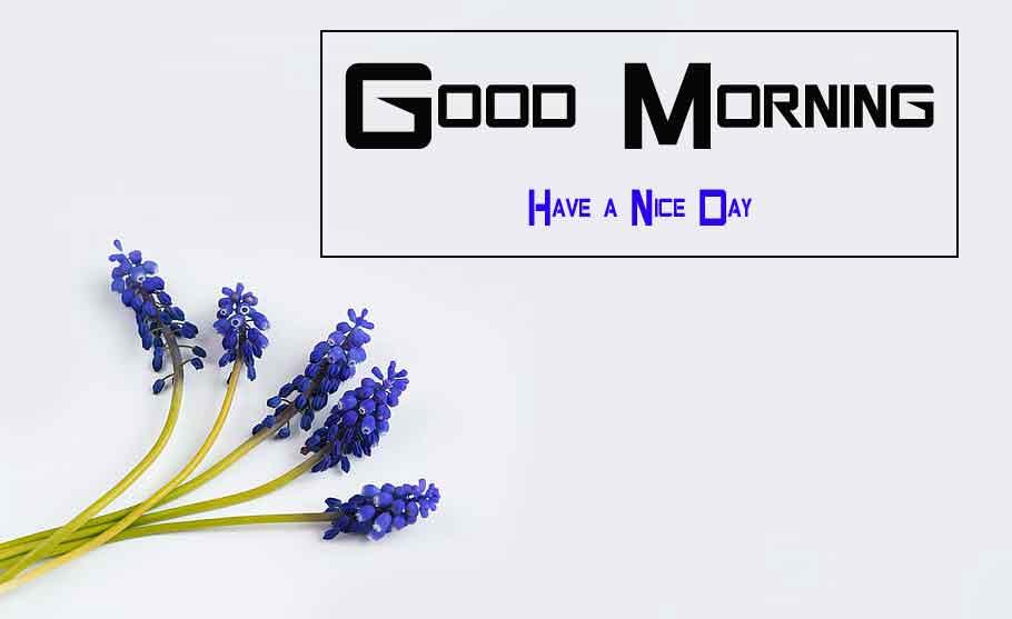 cute blue Flower good morning pics