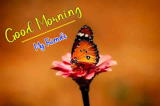 cute butterfly k Good Morning photo
