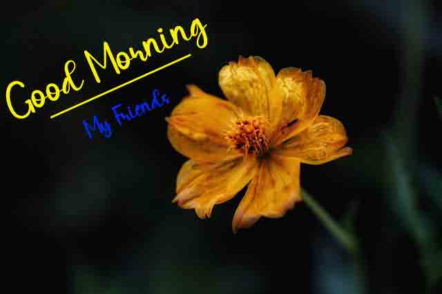 cute flower p Good Morning picture hd download