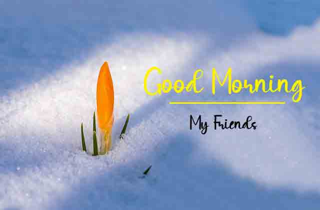 cute spring Good Morning hd download