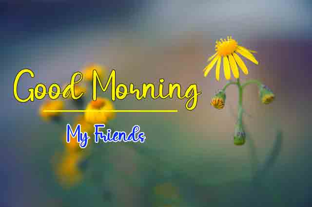 cute yellow flower k Good Morning images hd