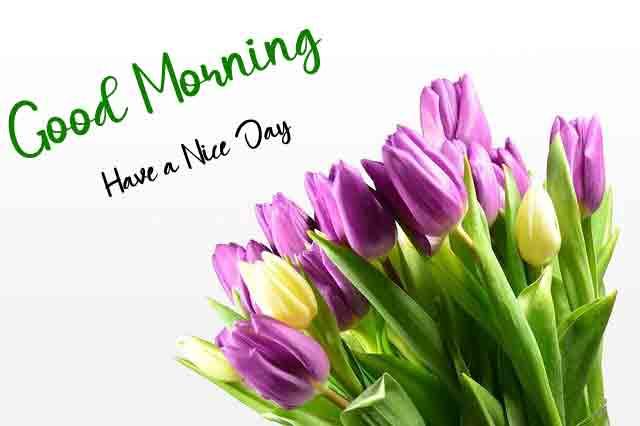 dark pink flower Good Morning pics hd