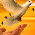 dove bird Peaceful Whatsapp DP Images