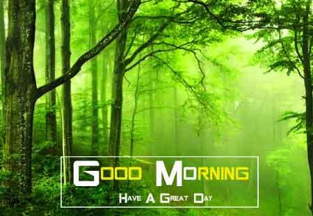 green nature Good Morning pics hd