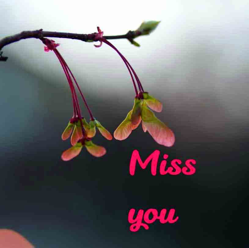 hd I Miss You Images pictures free hd