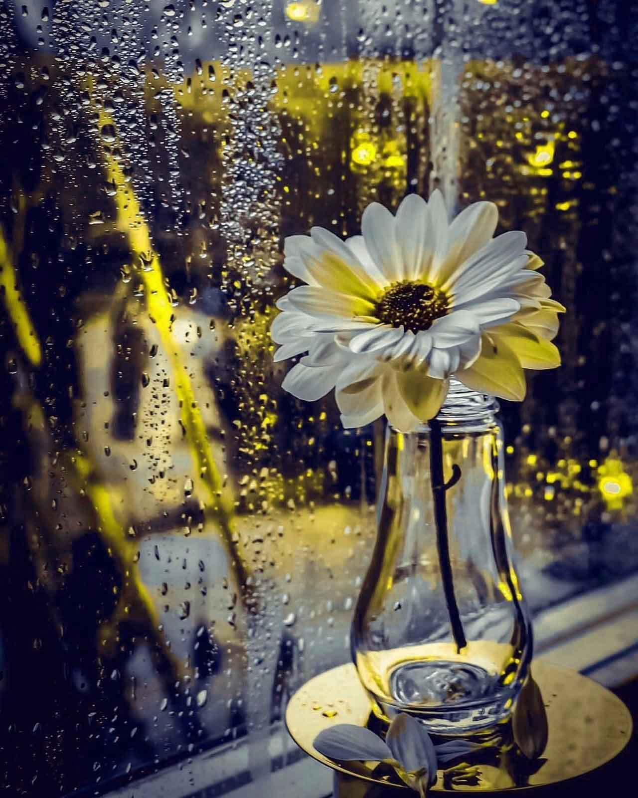 latest alone flower k Whatsapp Profile pics hd