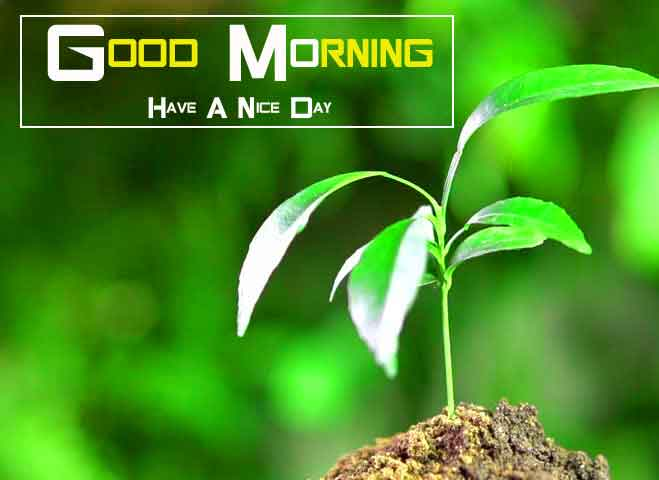 latest alone tree Good Morning Nature hd download