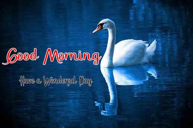 latest bird Good Morning pics hd