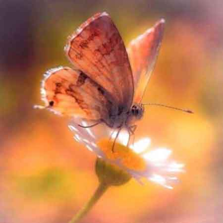 latest butterfly Whatsapp dp pics hd