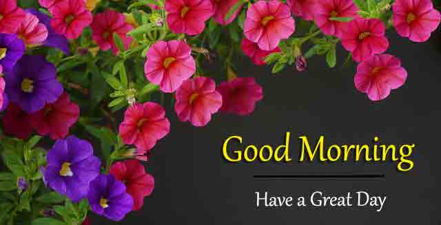 latest colorful Good Morning hd