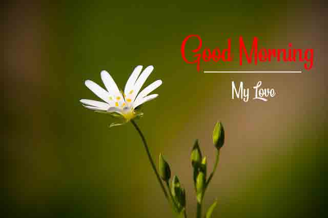 latest cute flower p Good Morning picture hd download