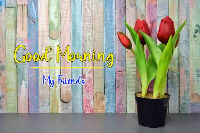 latest flower Good Morning hd free download