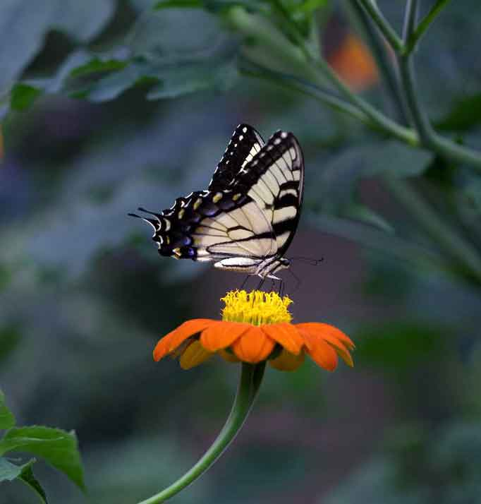 latest flower and butterly Whatsapp dp pics hd