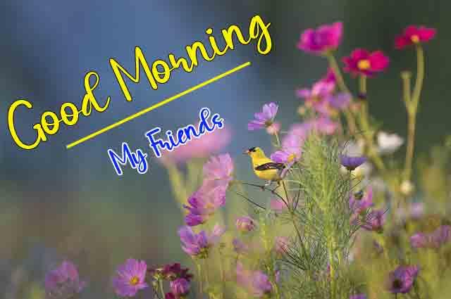 latest plant p Good Morning pics hd