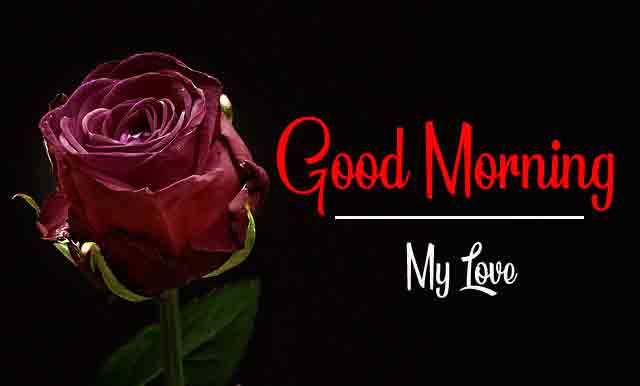 latest rose Good Morning hd download